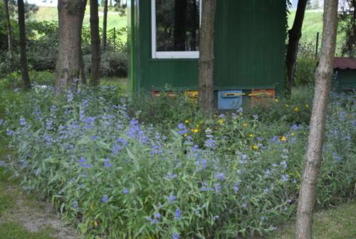 ogród8